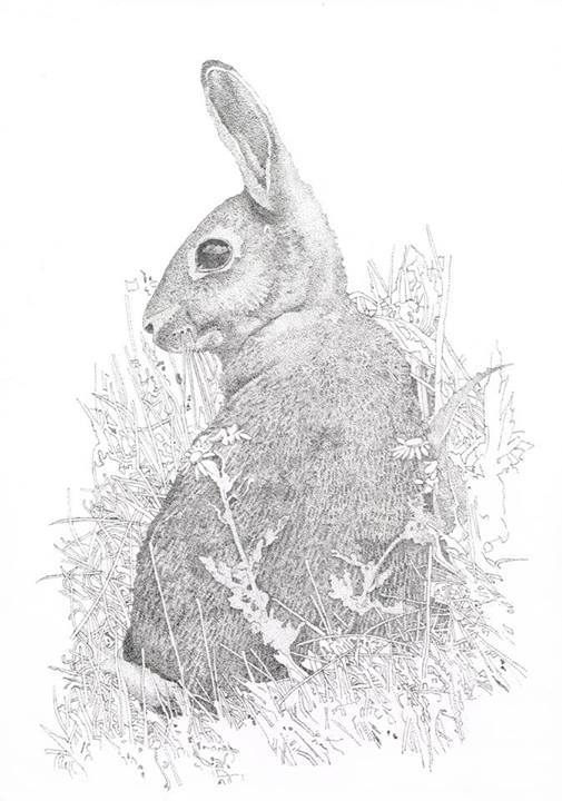 Duncan Osborne Wildlife Artist - Greetings Cards