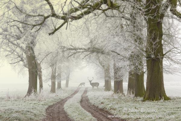 Noel Bennett - Photography